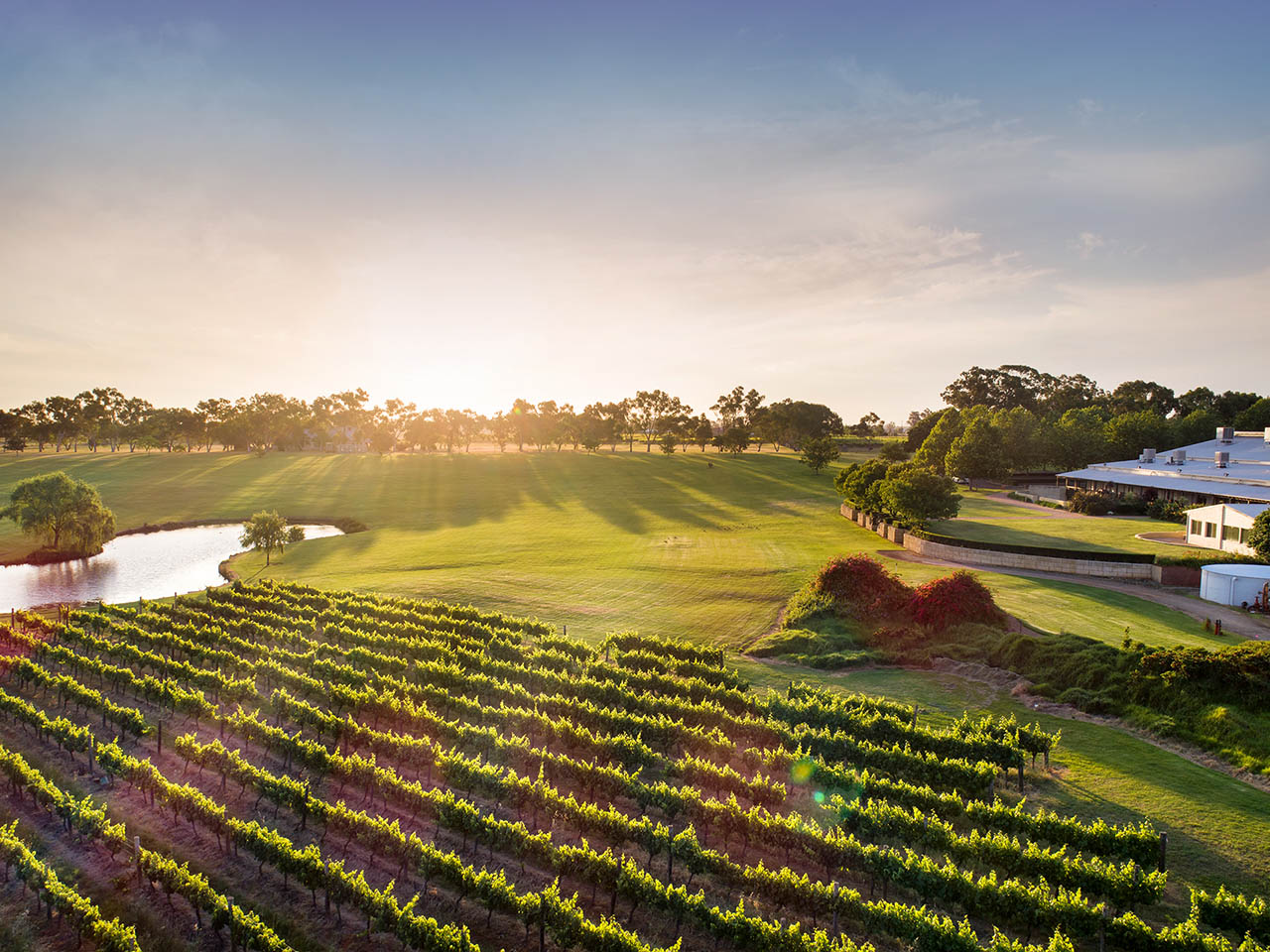 The Wine Vineyards With The Sun Setting In The Background.