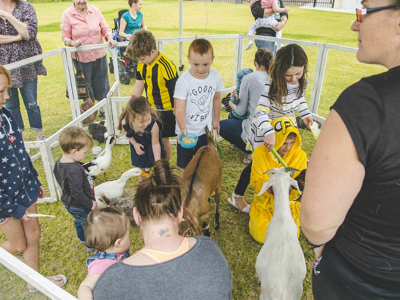 Children Petting Animals At A Small Animal Farm On The Grass Area At The Outside Event Venue.
