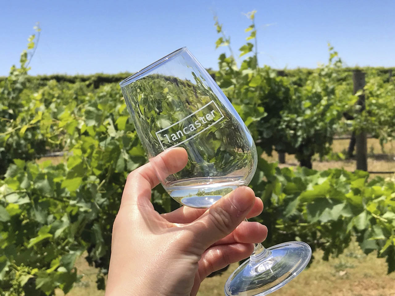Lancaster Winery Wine Glass