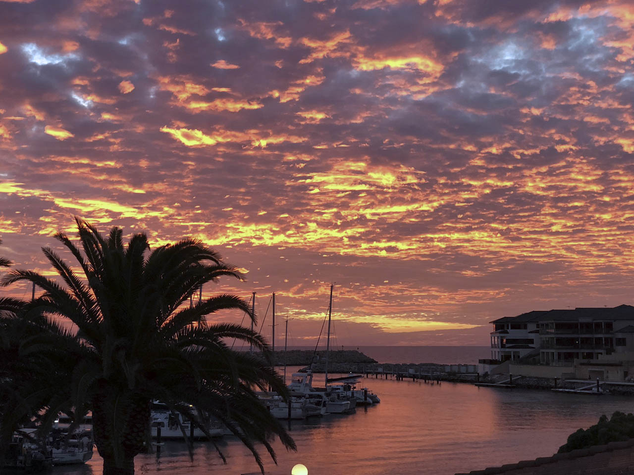 The Marina At Sunset With A Palm Tree In The Foreground And Backdrop Of The Sea.