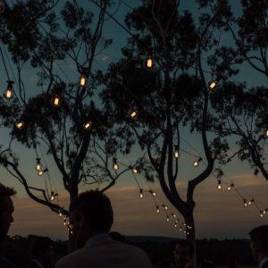 String Lights Under The Trees At Dusk.