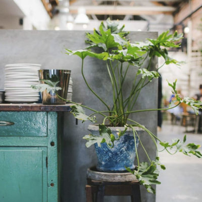 Plant pot with succulent plant on stool next to a table with pile of plates in foreground with cafe in background