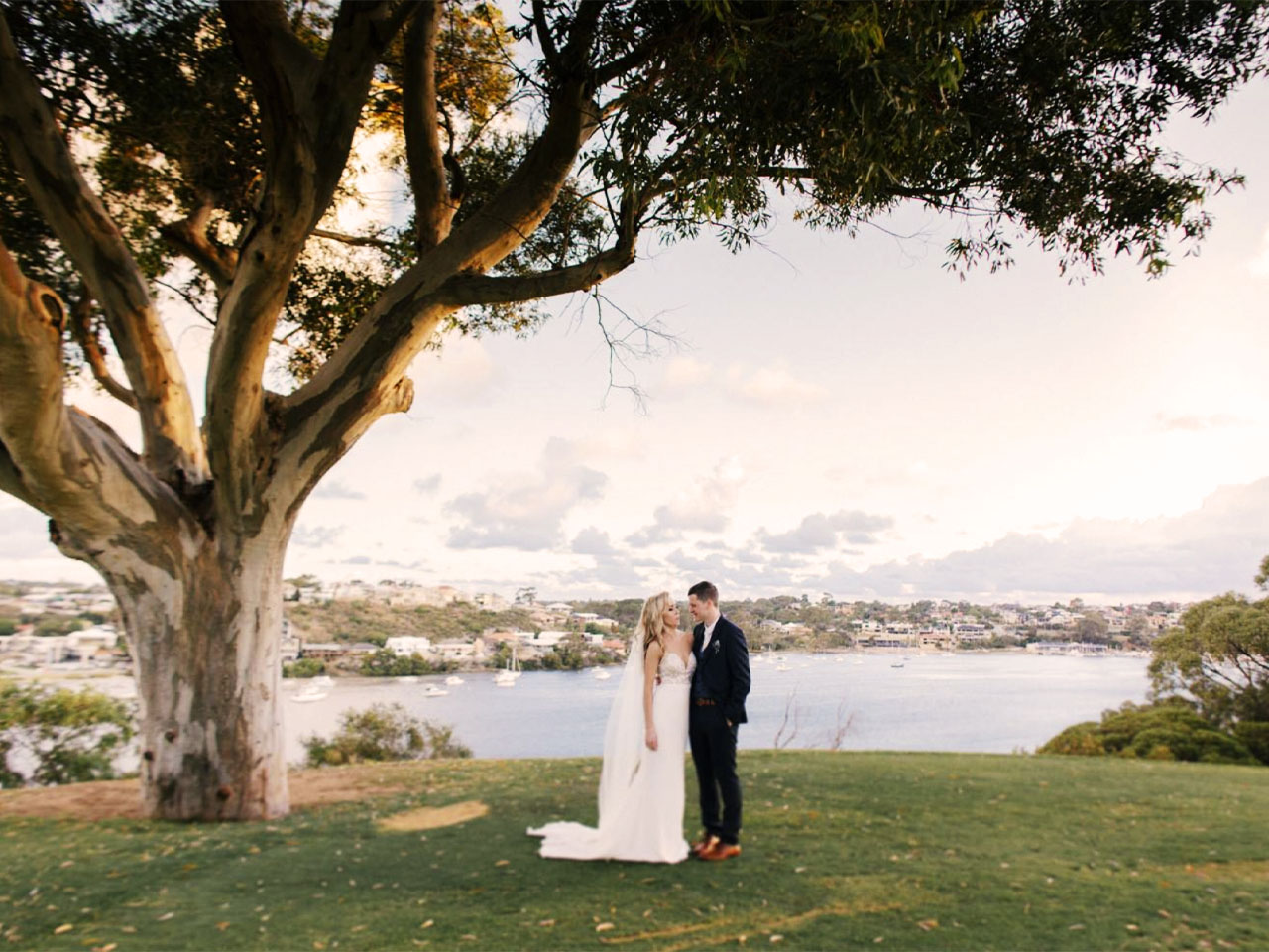 Wedding couple underneath tree overlooking Swan River