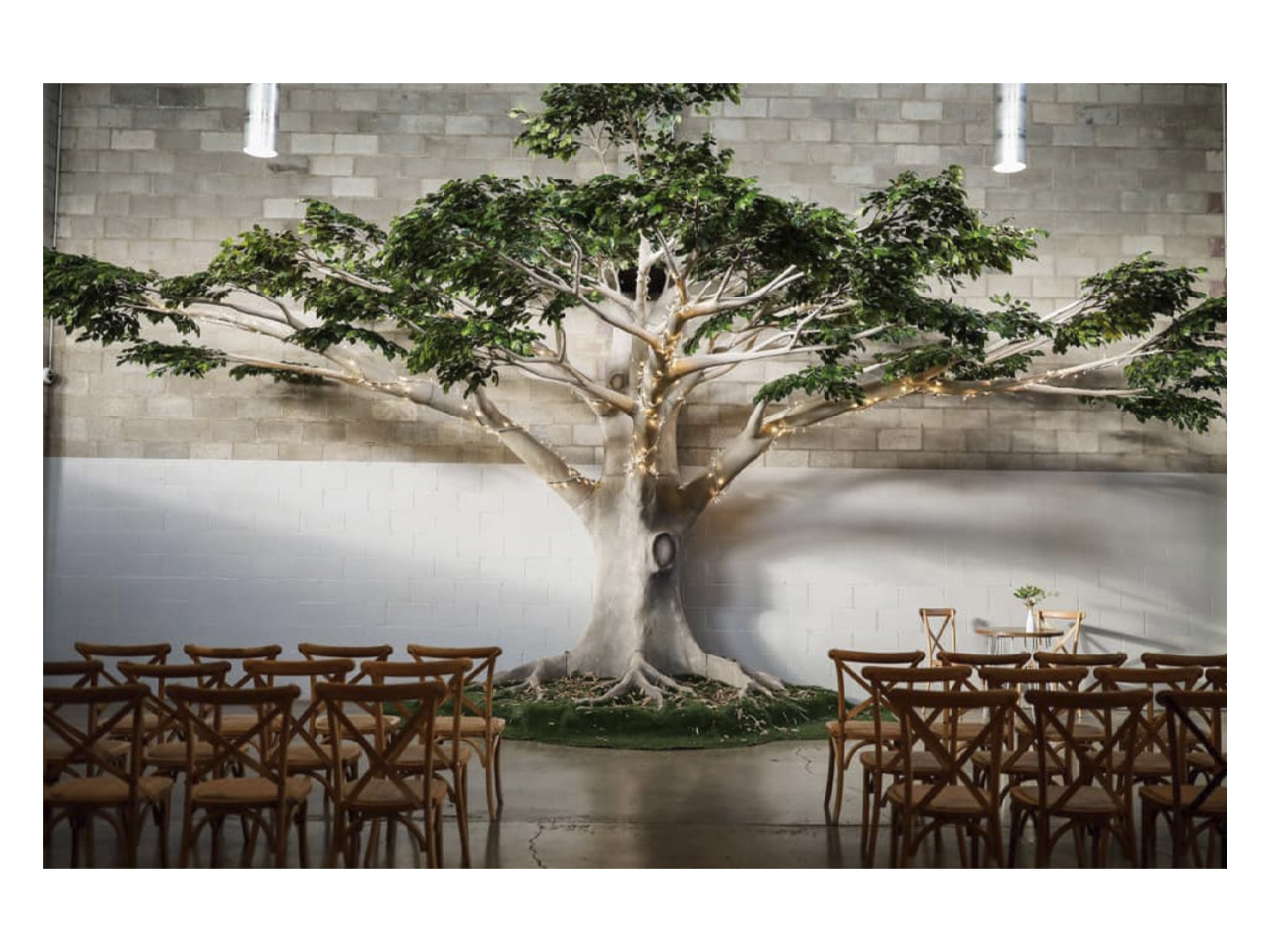 Stunning function room with chairs facing indoor tree decoration